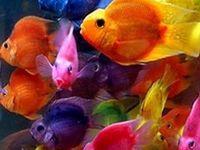 Fish and Aquatic Life