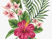 Terry commission Hibiscus