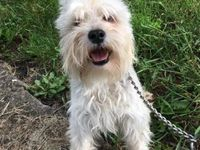 Adopt Baron On Terrier Mix Dogs Terrier Mix Humane Society