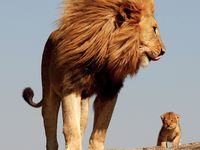 Jehovah's Creation {Animals}