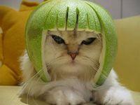 meoww