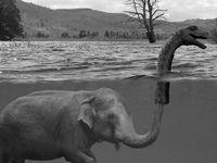 ♥ I love elephants ♥