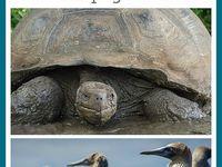 Galapagos- oh my childhood