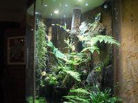Keeping & Breeding Reptiles/Amphibians