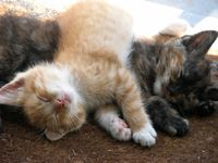 cuddles cats cuties  smiles colors