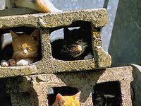 =^..^= More cats