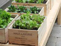 Gardening & Yard