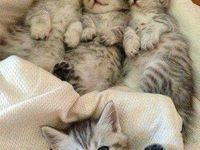 #gatticarini