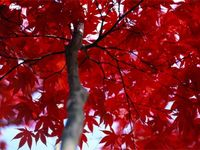Colours - Red