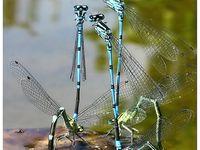 Dragonflies & other Creatures