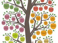 учёба дерево знаний