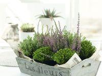 PLANTS/PLANTAS