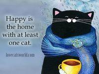 Diary Kucing Pesek Jangan Salahkan Kucing Kalau Kamu Tidak Bisa Hamil Atau Kena Toxo Kucing Hewan Hamil