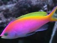 1000 images about vissen poissons on pinterest betta for Petco koi fish