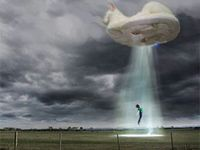 Surreal Animal Images