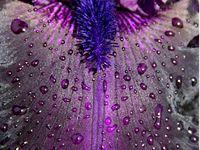 All Sorts of Purple