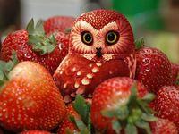 Owl-ful