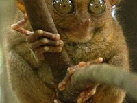 48 best Animals so Ugly They're Cute images on Pinterest