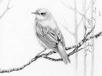 Drawings of Birds