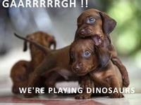 Best Doggies Ever!