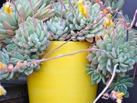 Succulents on pinterest succulents garden succulent containers and