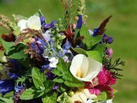 September Flowers / seasonal flowers in the Adelaide Hills