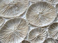 Padrōes, texturas, tecidos...