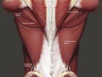 hip flexor pressure medicine