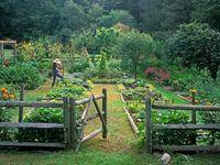 Backyard: Vegetable and Fruit Gardening