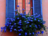 beautiful windows and doors