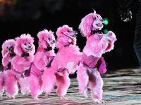 128 Best Pink poodles images | Pink poodle, Poodle, Pink