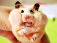 Rodent Love ~~ little ears, eyes, tongues, tails & toes == BIG HEARTS