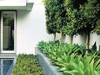 Outdoor - Plants