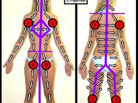 how to clean detox your lymphatic system