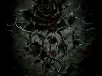 50 Black Roses Ideas In 2020 Black Rose Black Rose Flower Rose Wallpaper