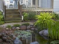 Gardening - Ponds