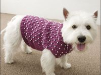 Knitting . . .  For My Pups