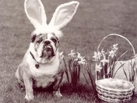 Easter Bunny ~ Bunny Hop ~ Easter and Everything Spring!!