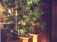 25 best images about non toxic house plants cat safe on for Low light non toxic house plants