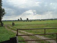 GROZA B.V. - Nederlands Landschap