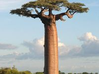 Magics Trees