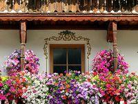 Flores, plantas, árboles ...