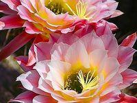 1 Fleurs