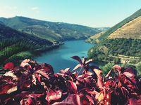 -Douro Valley- / O melhor da Região Demarcada do Douro