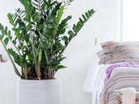 66 besten pflanzen f r zu hause bilder auf pinterest. Black Bedroom Furniture Sets. Home Design Ideas
