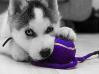 adorable animals and animals I love :)