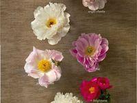 wedding florals / everyday florals / florals of my dreams