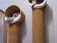 Ideas para gatos
