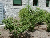 Backyard Bounty Plant List