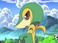 1000 Images About Best Of Snivy On Pinterest Keep Calm Guns And Artists
